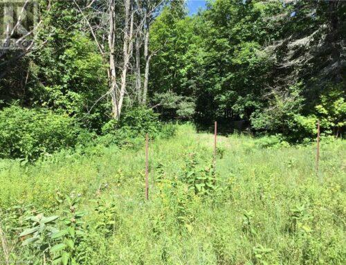 1302 RAVINE ROAD Minden Hills, Ontario